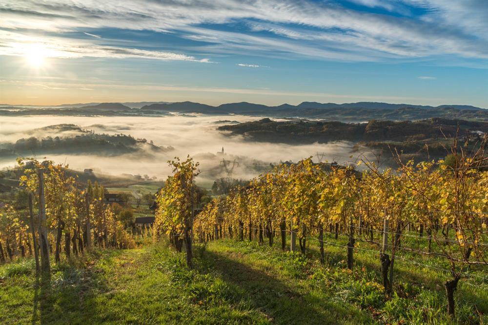 vinogradi-1091x727